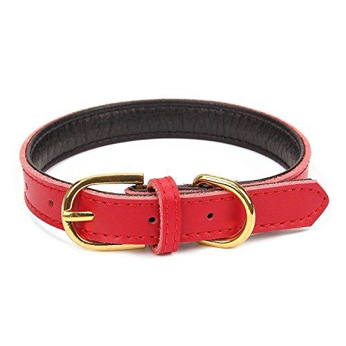 Mcdobexy Klassische weiche gepolsterte Leder Hundehalsband für Katzen Welpen kleine mittelgroße Hunde (XS(Neck20-26cm), Red)