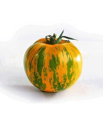 """BALDUR-Garten Veredelte Stab-Tomate """"Green Zebra"""" F1,2 Pflanzen Tomatenpflanzen von Baldur-Garten auf Du und dein Garten"""