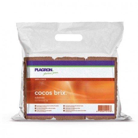 COCO BRIX x 6 PLAGRON