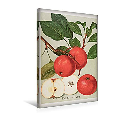 Premium Textil-Leinwand 30 x 45 cm Hoch-Format Rote Sternrenette, plattdeutsch: Steernappel   Wandbild, HD-Bild auf Keilrahmen, Fertigbild auf hochwertigem Vlies, Leinwanddruck von Jost Galle