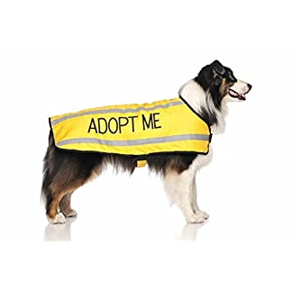 ADOPT ME (I Need A New Home) Yellow Colour Coded S M L Reflective Waterproof Fleece Lined Warm Dog Coats PREVENTS… 12