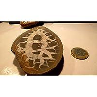 Boviswert Meine schönsten Septarien, 172,35 g. schwer, mit wunderschöner Zeichnung, Farben und Strukturen. Made... preisvergleich bei billige-tabletten.eu