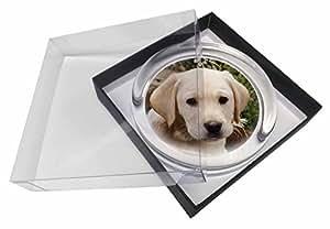 Jaune chiot Labrador Presse-papiers en verre dans une boîte cadeau de noël prése