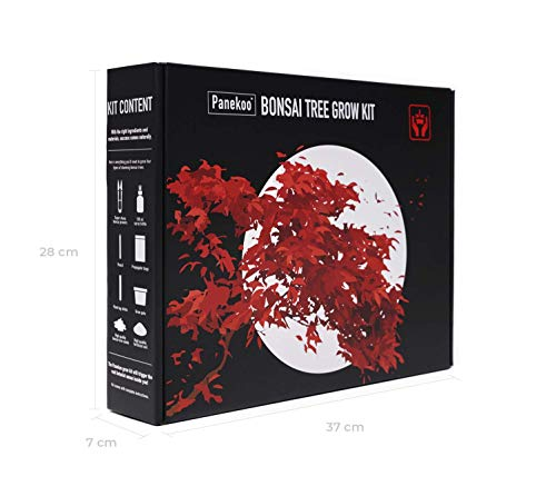 Panekoo coltivare il proprio kit bonsai set regalo di giardinaggio - coltiva il tuo bonzai da zero - quattro specie di bonsai - kit germogliazione per principianti con accessori e strumenti
