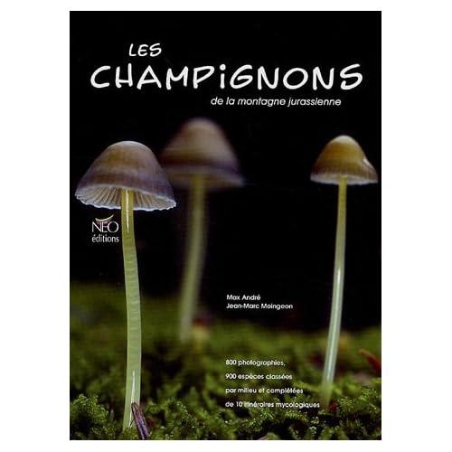 Les champignons de la montagne jurassienne