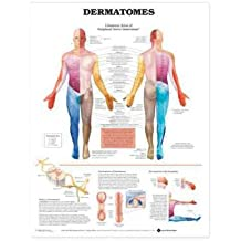 (Dermatomes Anatomical Chart) By Anatomical Chart Company (Author) Paperback on (Mar , 2004)