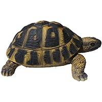 Vivid Arts Hermann tortuga (tamaño F)