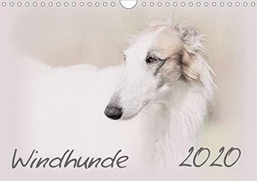 kalender 2020 DIN A4 quer): Windhunde - Wunderschön gestalteter Kalender. Jedes Monatsmotiv gleicht einem kleinen Kunstwerk. (Monatskalender, 14 Seiten ) (CALVENDO Tiere) ()