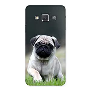Cute Pug Dog Grass Multicolor Back Case Cover for Galaxy A3