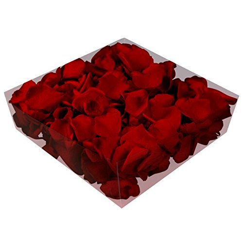 floristikvergleich.de 1l Liter Echte Rosenblätter weinrot konserviert – Streukörbchen Hochzeit – Dekoration