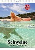Schweine auf den Bahamas! (Wandkalender 2020 DIN A4 hoch): Schwimmende Schweine im Dauerurlaub auf den Bahamas (Planer, 14 Seiten ) (CALVENDO Tiere)