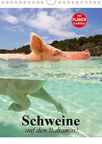 Schweine auf den Bahamas! (Wandkalender 2020 DIN A4 hoch): Schwimmende Schweine im Dauerurlaub auf den Bahamas (Planer, 14 Seiten ) (CALVENDO Tiere) (Planer Schwein)