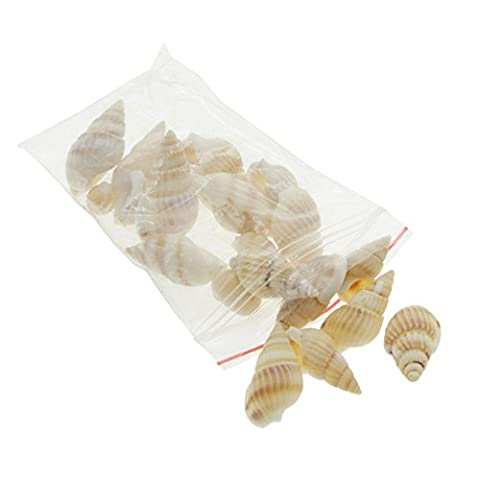2Pcs Miniatur-Landschaft Ornament Conch Scallop Sea Shell Sandbeach Aquarium Dekoration