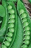 Shopvise Samen-Grünes Pole-Erbsen-Telefon-Russisches Organisch Gewachsenes Erbstück-Gemüse