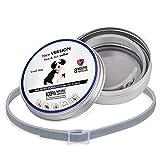 Wellouis Cat Dog Floh- und Zeckenhalsband, 8 Monate Schutz, Wasserdichte Anti-Insekten-Moskitos ätherisches Öl Kragen Kragen