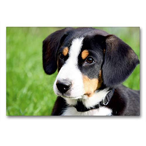 Premium Textil-Leinwand 90 x 60 cm Quer-Format Entlebucher Sennenhund | Wandbild, HD-Bild auf Keilrahmen, Fertigbild auf hochwertigem Vlies, Leinwanddruck von SchnelleWelten