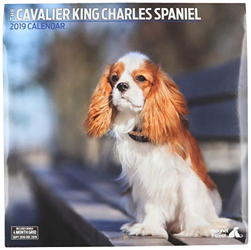 Magnet & Stahl 22.819,4 cm Cavalier King Charles Spaniel Traditionelle
