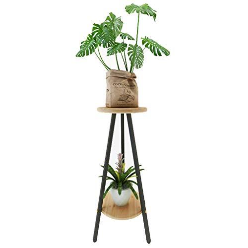 Plantes Moderne Vert
