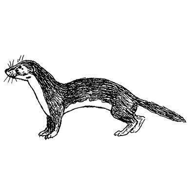 25cm-weasel-timbri-in-gomma-5311