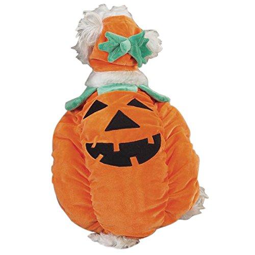 e Wachhund, Kostüm, Mittel (Halloween-kürbis-gesichter, Fotos)