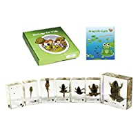 REALBUG BFK1106 Biology 4 Kids-Frog Life Cycle Development Toy