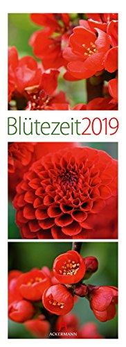 Blütezeit 2019, Wandkalender im Hochformat (24x66 cm) - Moderner Blumenkalender mit Triplets mit Monatskalendarium