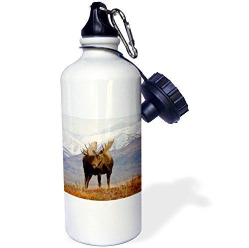 Zhaoshoping Moose Bull Wildlife Denali National Park Alaska Bouteille d'eau en Acier Inoxydable pour Femmes Hommes Enfants 400 ML