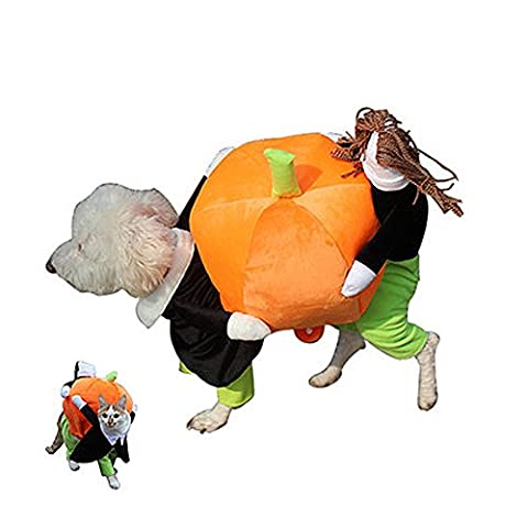 Swyivy Halloween citrouille Costume d'animaux Funny Dress Up