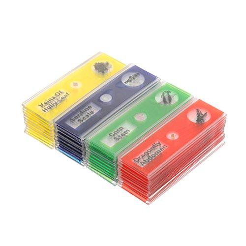 UEETEK 48 Piezas Preparado portaobjetos, 4 colores Muestra biológica Insectos animales plantas muestra, estereomicroscopios portaobjetos para niños Capacitación científica para niños