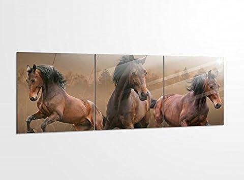 Acrylglasbilder 3 Teilig 150x50cm Pferde wild Herde Mustang braun Acrylbild Bilder Acrylglas Wand Bild Kunstdruck 14?5560, Acrylglas Größe 6:BxH Gesamt