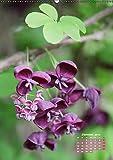 Es rankt, klettert und blüht (Wandkalender 2019 DIN A2 hoch): Eine Auswahl besonderer Kletterpflanzen für Ihren Garten (Monatskalender, 14 Seiten ) (CALVENDO Natur)