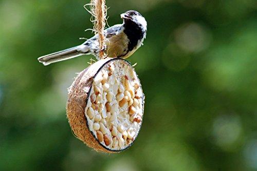 dobar Zehn gefüllte Kokosnüsse in 5 Vogelfutter-Sorten zum Aufhängen - 11