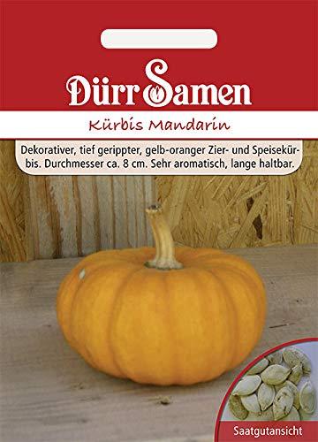 Dürr Samen 1567 Kürbis Mandarin (Kürbissamen)