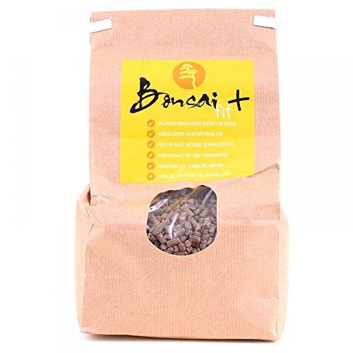 Bonsai-Shopping 63024