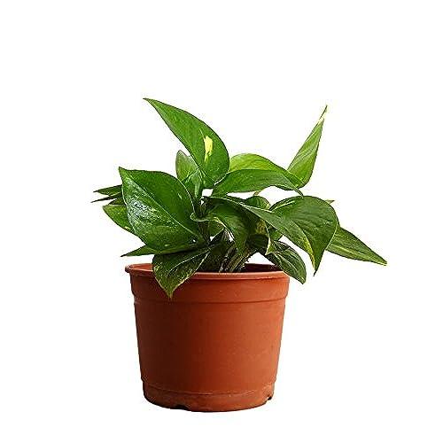 Indoor Live Plants Buy Indoor Live Plants Online at Best Prices in
