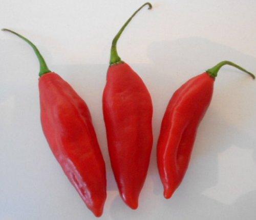 Fatalli Rot 10 Samen (Extra scharfe Chili)