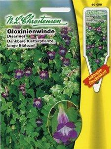 Gloxinienwinde (Portion inklusive Stecketikett)
