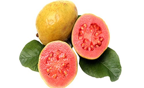 BEE Garden Organic Red Thailand Guava Fruit Seeds - Pack of 50 Seeds  available at amazon for Rs.169