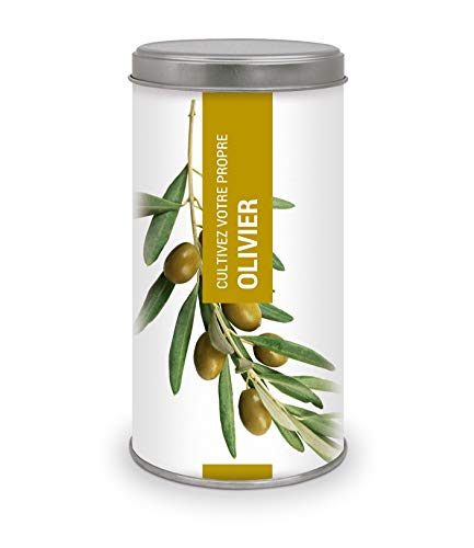Garden Pocket - Cultivez votre propre OLIVIER - BONSAI