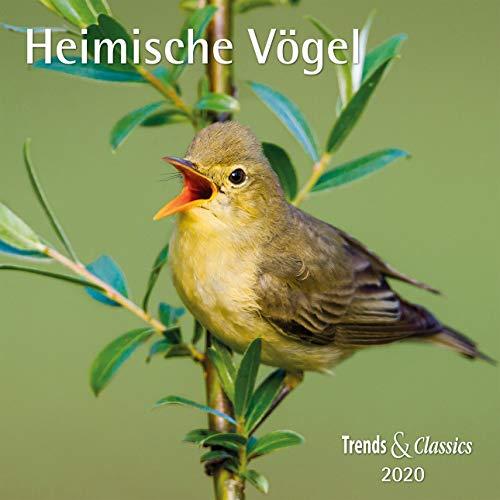 Heimische Vögel 2020 - Broschürenkalender - Wandkalender - mit herausnehmbarem Poster - Format 30 x 30 cm