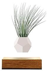 Idea Regalo - FLYTE Lyfe Vaso fluttuante, Legno, Bianco, 15x 15x 15cm