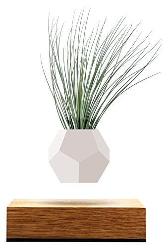 FLYTE Lyfe Deko-Pflanzentopf aus Silikon, Eichenholzbasis, schwebend per Induktion, für Luftpflanzen geeignet