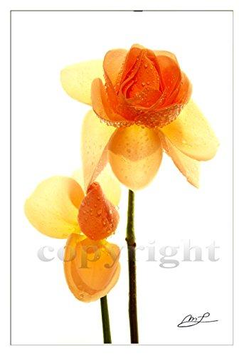 Leinwanddruck 90x60 cm, 'geborgen' Rosen, 2 cm Keilrahmen im Galerie-Stil, Rahmen-Effekt gespiegelt, inkl. Aufhängeset für Leinwand, Photo der Photokünstlerin Margaret Lemmen