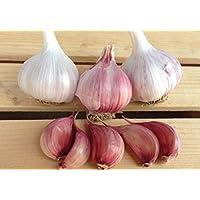 Pinkdose® Gourmet Chesnok Bulbos de ajo rojo - 4 bulbos - Ajo para plantar para la siembra de otoño - Cultivos orgánicos no modificados genéticamente