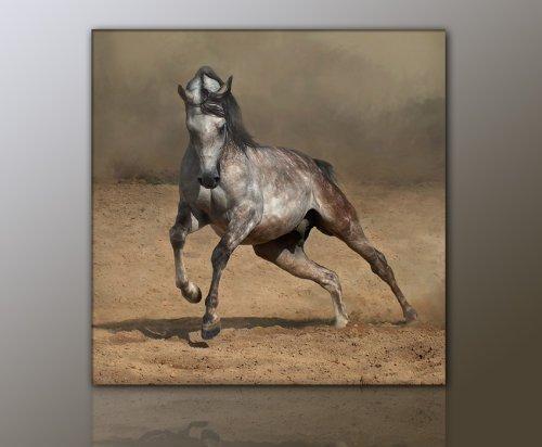 WILD Leinwandbild Bilder Pferd Pferdebild (horse5 50x50cm) Hengst Pferde auf Leinwand gerahmt - Bilder fertig gerahmt mit Keilrahmen riesig. Ausführung Kunstdruck auf Leinwand. Günstig inkl Rahmen