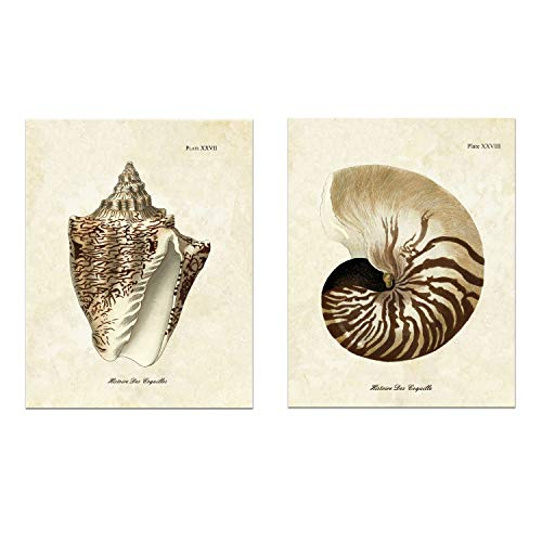 Hudson Frames 2 Druckset Vintage Muscheln Galerie Wand Küsten Wanddekor Kunstdruck Kunstdruck 8 x 10 ungerahmt (2er Set) - Der Usa-wand-kunst Karte