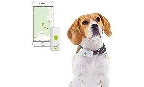 Weenect Dogs 2 - Il più piccolo collare GPS per cani al mondo