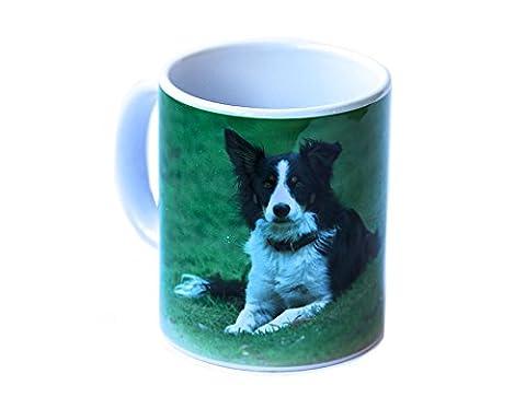 Animal Tasses Border Collie dog