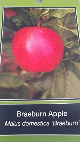 4'-5' leben Braen Fruit Live-s saftig frischen Heim by Farmerly -