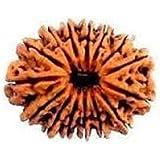 Retrend 17 Mukhi Rudraksha 100% Original & Natural by Lab Certified